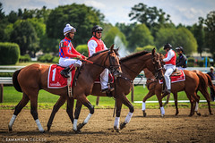 Before the Race (Samantha Decker) Tags: horse ny newyork upstate saratogasprings nyra canonef135mmf2lusm saratogaracecourse canoneos6d samanthadecker