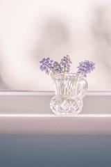Afternoon Light (Mitch Rees) Tags: flower sunshine vase windowsill 1530