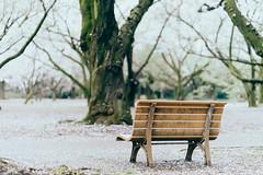 | Longing () Tags: japan tokyo shinjuku cherryblossom  sakura    hanami shinjukugyoen   sonya7 batis1885 zeissbatis85mmf18