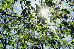 Sunlight (Frostroomhead) Tags: light sky plants sun sunlight green art nature leaves nikon f14 sigma 30mm d5200