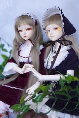 (Muri Muri (Aridea)) Tags: dorothy doll bjd sophia abjd aiko happydoll ndoll littlemonica