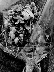 Tenderly (Broot - Thanks for a half million views!!) Tags: blackandwhite bw plant paris flower monochrome cemetery grave spring memorial mourning tomb offering april tribute montparnasse grief