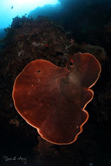 Sponge (Randi Ang) Tags: bali coral wall canon indonesia photography eos underwater angle wide dive scuba diving fisheye ang sponge 15mm randi 6d amed jemeluk