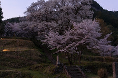 47Butsuryuji Temple (anglo10) Tags: sunset japan cherry temple