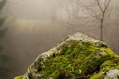Foggy stone (-Baptiste Coub-) Tags: trees fog forest outdoor hiver paysage foggyday faune chablais 35mn allinge foggyforest abigfave exterrieur d3100 baptistecoubronne grottenotredamedelourde