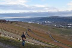 Blick bers Remstal (chrissie.007) Tags: germany deutschland view vineyards valley aussicht badenwrttemberg sddeutschland weinberge schwabenland remstal kleinheppach januar03