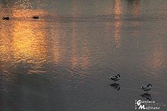 January Sunset (gianluca_malfitano) Tags: sunset italy color canon blackwhite flickr tramonto photos hobby uccelli sicily augusta 1855 siracusa salina gennaio facebook magia 70300 gianluca fotografando malfitano gianlucamalfitano