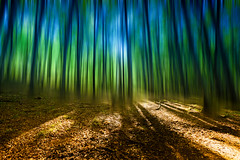 Enchanted (photon tamer) Tags: blue brown abstract green nature colors sunshine forest germany motionblur ruegen enchanted jasmund