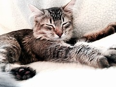 Rupert is sleeping (Kenster79) Tags: cute cat kitten pussy meow pussycat
