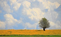 "Tree (io747) Tags: landscape tree clouds yellow field dream myanmar burma walk ""flickraward5"""