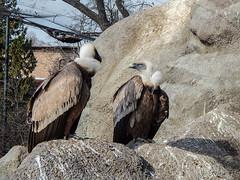 Budapest Zoo (ThemeParkMedia) Tags: elephant animals zoo penguin monkey europe hungary budapest rhino giraffe vulture visitor attraction