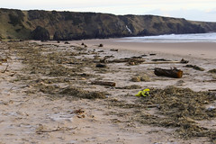 Debris on St. Cyrus Beach (foggybummer (Keith)) Tags: beach debris shoreline driftwood stcyrus hightideline