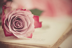 Romance (RoCafe) Tags: pink stilllife flower rose soft pastel romantic nikond600 nikkormicro105f28