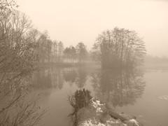 misty day P1237038 (hlh 1960) Tags: trees winter mist reflection nature water misty germany landscape pond nebel natur landschaft reflexion spiegelung januar weiher