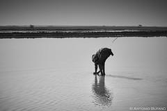India2016_172 1 (Antonio Bufano) Tags: travel blackandwhite india photography land d750 viaggi ritratti gujarat treatment saltpan drylake dasada littlerannofkutch