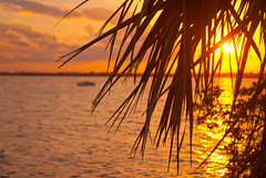 February (Katie's Cape) Tags: sunset orange reflection tree sailboat river island nikon florida banana palm cape d200 merritt canaveral