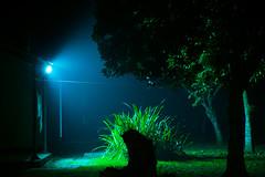 Silence Of The Lambs (abrarhayat) Tags: longexposure tree night contrast dark darkness highcontrast eerie silence mystic