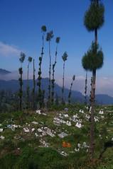 IMGP7434.jpg (Andrea Kirkby) Tags: graveyard indonesia landscape volcano java muslim islam tomb caldera bromo