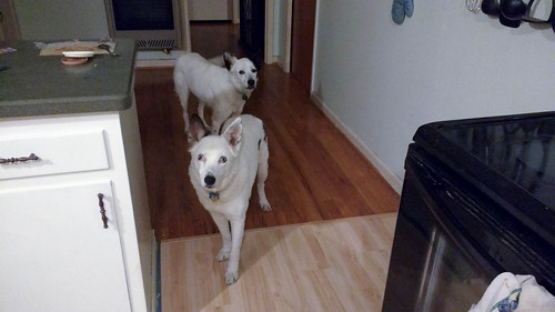 Dogs in Kitchen