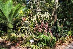 Felt Plant Tree (Phil Goldman) Tags: lego florida westpalmbeach 11 february 2016 mountsbotanicalgardens pgoldman