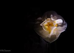 Macroaufnahme_Low-Light (ostfriese77) Tags: light flower macro dark nikon low blume makro tamron langzeitbelichtung 18270 d5100