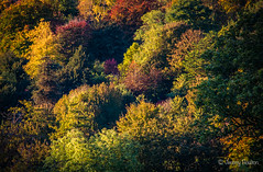 Autumnal (JKmedia) Tags: autumn trees leaves colourful autumnal turning 2015 boultonphotography