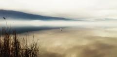 * (PattyK.) Tags: lake water lakeside whereilive lakefront ilovephotography ioannina giannena epirus bythelake ipiros pamvotida      lakepamvotida ioanninalake    samsungj5