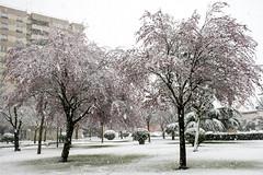 _APB2645 (2) (plazaberribaranain) Tags: nikon nieve baraain invierno agustin navarre elurra navarra nafarroa negua d7200 agustinpea nikond7200 plazaberri plazaberriinfo