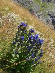 wild flowers (Riex) Tags: flowers houses nature fleurs schweiz switzerland suisse maisons champs farms svizzera wildflower a100 engadine sauvages amount graubnden grisons graubunden fermes valfex sal1680z minoltaamount carlzeisssonyf35451680mm variosonnartdt35451680