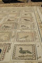Andalusia: I mosaici di Italica (Luciano ROMEO) Tags: andalusia spagna italica romani mosaici tessere sitoarcheologicoitalica