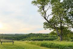 Feels Like Home (jessp.) Tags: tree green nature contrast canon landscape view hiking wildlife hill may jess hillside lehighvalley wander gamepreserve schnecksville trexlergamepreserve 2013 t4i petrohoy