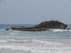 """Tulum: l'île aux pélicans <a style=""""margin-left:10px; font-size:0.8em;"""" href=""""http://www.flickr.com/photos/127723101@N04/25450987433/"""" target=""""_blank"""">@flickr</a>"""