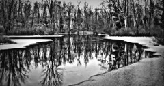 winter is coming (Do Gon) Tags: trees winter bw snow cold reflection fall ice water forest river landscape outdoors evening frozen stream frost dusk surreal brush chilly lke shrubs thaw thinice