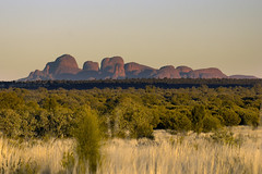 DSC07014 (slackest2) Tags: grass rock sunrise australia uluru kata tjuta northern ayres scrub olgas territory