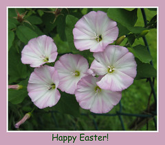 """Happy Easter"" (ellenc995) Tags: flowers easter 2016 ruby3 coth supershot akob abigfave citrit platinumheartaward rubyphotographer 100commentgroup ayearofholidays challengeclub naturallywonderful top25purplepinkandblue ruby10 thesunshinegroup sunrays5"