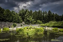 Biltmore Estate Reflecting Pool (cherylfocke) Tags: storm tree water landscape site pond banana historical lilypads lilypond biltmoreestate