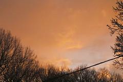 Orange Sky (AlecSilva) Tags: winter 2015 2016 winter2016 riwinter winterri rhode rhodeisland alecsilva orange trees icicles melting snow snowing colors bushes canon canont5 alec silva fullmoon island photography hdr iphone nikon park swan lighthouse photographer rogerwilliams moon weathergeek