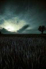 Alone in the dark  #alone #dark #darkness #night #Hopeless #death #loneliness (seelenduft) Tags: night dark death alone loneliness darkness hopeless