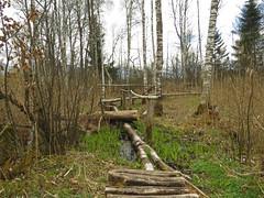 Hiking in the bog (aniko e) Tags: way outdoors spring hiking path trail swamp moor bog moos wetland neture benediktbeueren moosrundweg