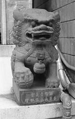 Lion, Chinatown, SF (bclook) Tags: sanfrancisco street leica bw classic monochrome 50mm chinatown noiretblanc kodak trix d76 summicron kodaktrix schwarzweiss leicam6classic selfprocessed m6 400iso 502 filmisnotdead istillshootfilm bwfp