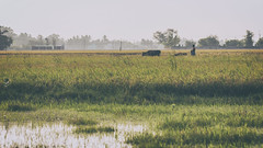 Village Life (Vilvesh) Tags: morning people sun field canon photography cow village agriculture tamilnadu cwc villagelife canon100mm nemam chennaiweekendclickers thirumazhaisai