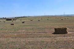 IMG_0610 (mudsharkalex) Tags: california hay bales bale haybale haybales mountainhouse mountainhouseca