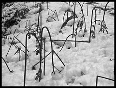 APRIL-SNOW IN STYRIA/AUSTRIA (LitterART) Tags: schnee snow fern sterreich nikon frost chaos frosty april farn steiermark schden styria nikonp330