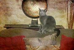 Cat-Tastic (floralgal) Tags: animal cat graycat catportrait felineportrait grayfeline graydomesticshorthair catposingforcamera