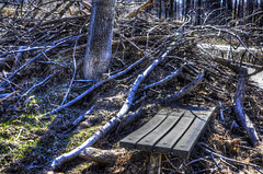 Beaver Bench (creepingvinesimages - struggling to keep up!) Tags: trees water nova bench outdoors woods nikon wetlands fairfax beaverdam beavers birdsanctuary topaz adjust autofocus wildlifepreserve hbm huntleymeadowspark photomatix hyblavalley d7000 pse14
