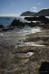 Rock platform at The Lagoon, LHI (NettyA) Tags: water rocks shoreline australia coastal nsw backlit day3 karst volcanic unescoworldheritage lordhoweisland thelagoon 2016 lhi rockplatform calcarenite lordhoweforclimate