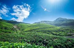 landscape of Munnar ([s e l v i n]) Tags: wallpaper india green nature landscape natural tea kerala greenery munnar teaestate keralatourism keralatravel picturesofkerala selvin