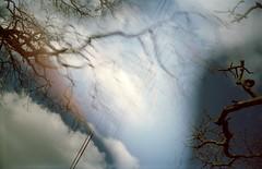 Sketch (kat-ward) Tags: uk trees england sky abstract colour film nature clouds analog 35mm photography lomo lomography experimental branch unitedkingdom doubleexposure magic lofi dream multipleexposure ethereal analogue smena8m filmphotography thenewforest