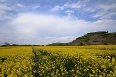 IMG_1683 (D.Phil) Tags: natur feld himmel landschaft raps kaiserstuhl weinberge
