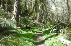 tillamookhike08 (jcravens) Tags: oregon forest hike campground galescreek stateforest tillamookforest